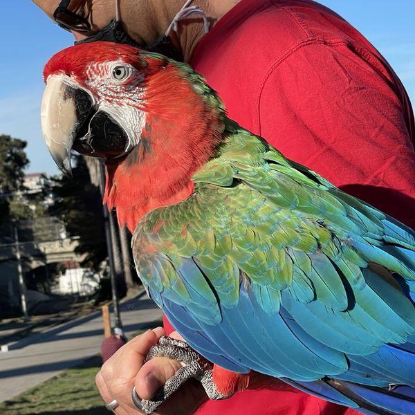 Parrot looking at me! thumbnail