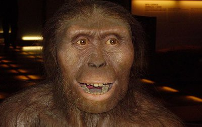 An artist's reconstruction of Australopithecus afarensis, a species that can be called a hominid or a hominin.