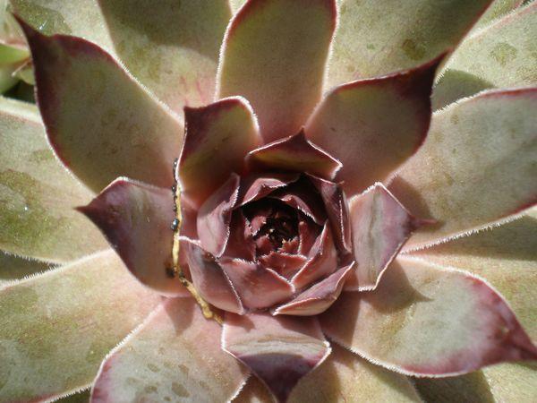 cactus family thumbnail