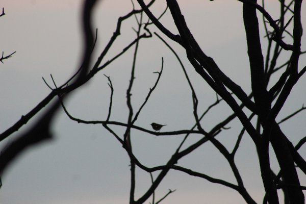 Sunrise Bird  thumbnail