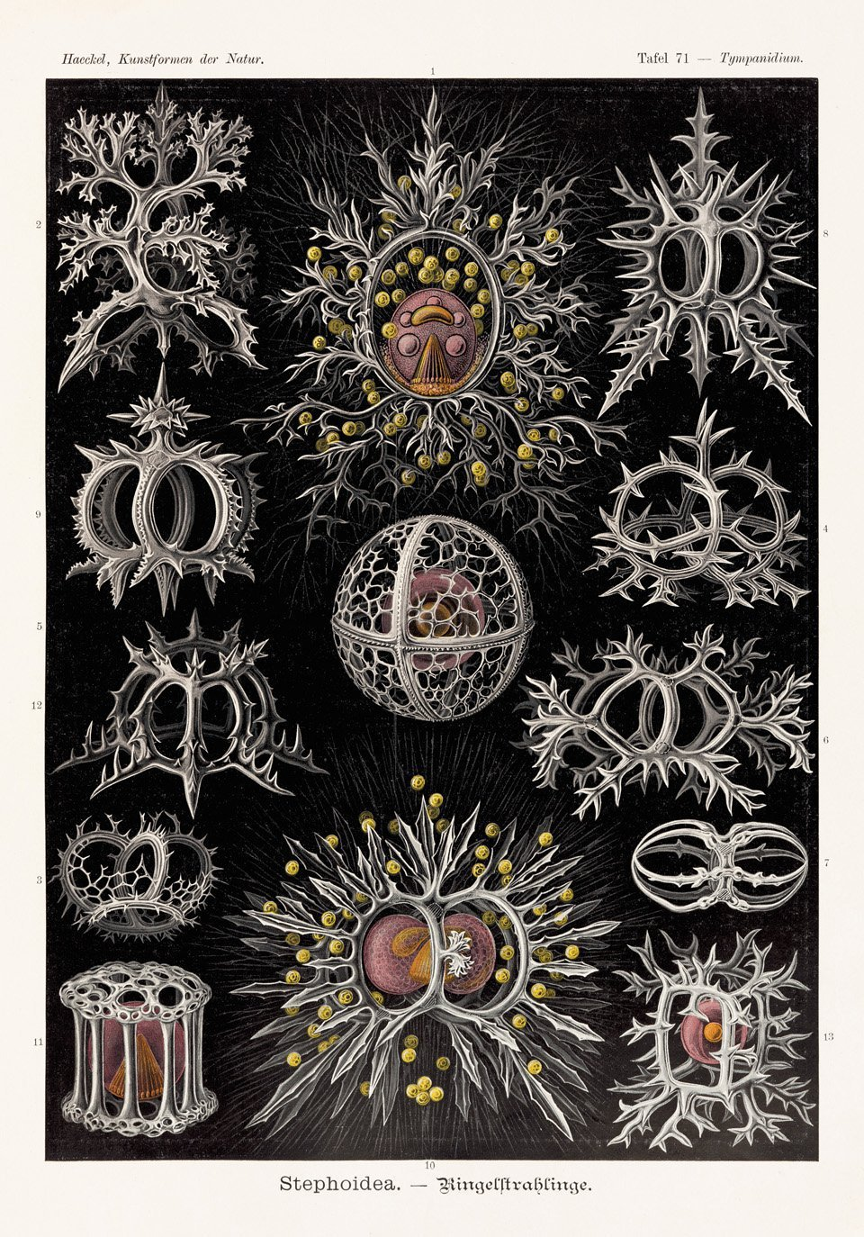 This 19th-Century Illustrator Found Beauty in the Slimiest of Sea Creatures