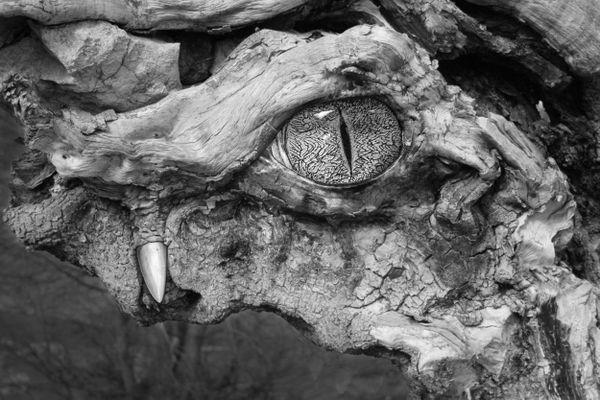 old fallen tree thumbnail