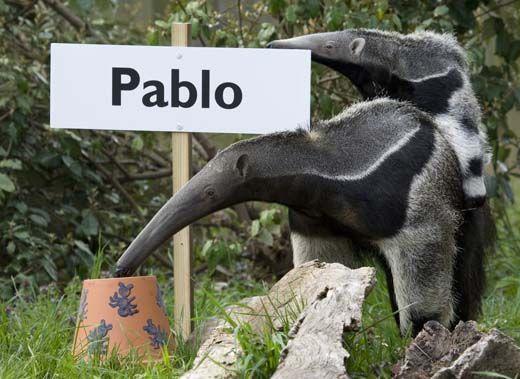 20110520110727Maripi-with-Pablo-on-back-picks-name-219MM.jpg