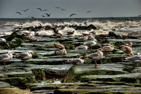 Birds of Atlantic City thumbnail