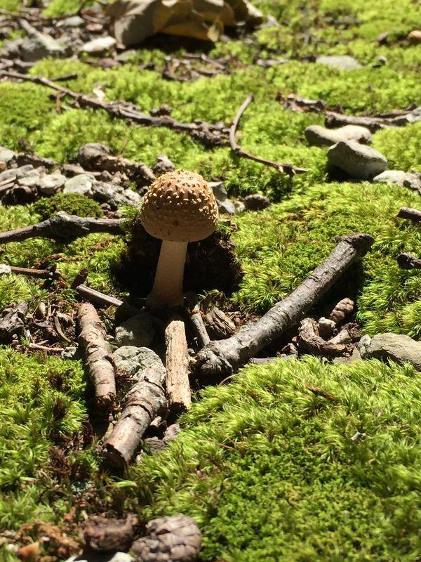 Mushroom vs moss thumbnail