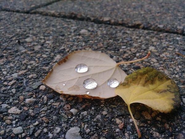 Rain drops on fallen leaves on my patio thumbnail