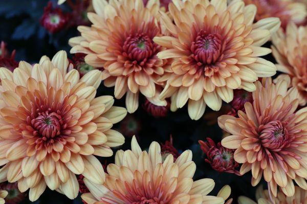 Flowers like the sun thumbnail
