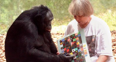 Sue Savage-Rumbaugh (with Kanzi in 2003) says her bonobos can communicate with her and each other using more than 348 symbols.