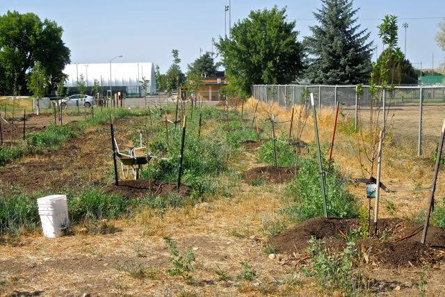 Move Over, Community Gardens: Edible Forests Are Sprouting Up Across America