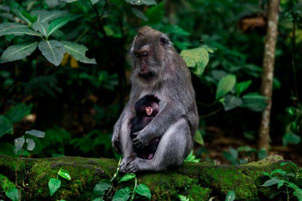 Mother Monkey thumbnail
