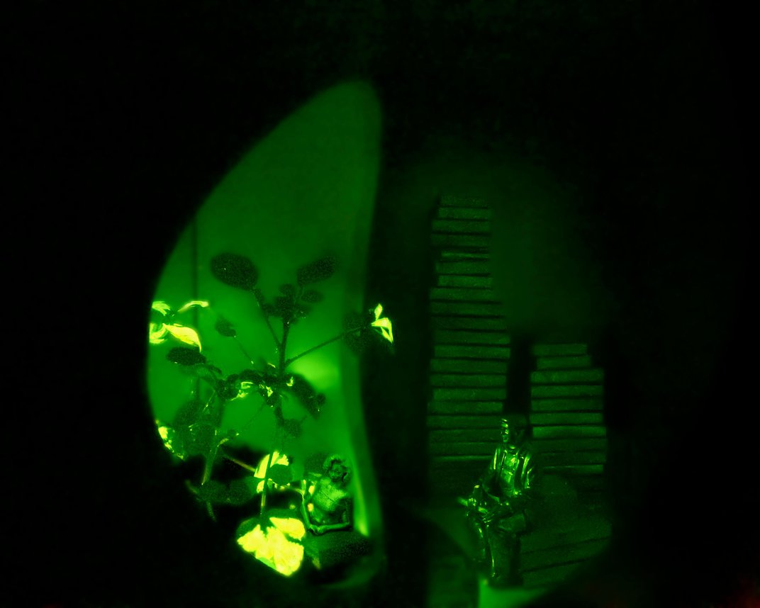 These Glowing Plants Could One Day Light Our Homes