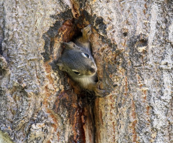 Squirrel Nest thumbnail