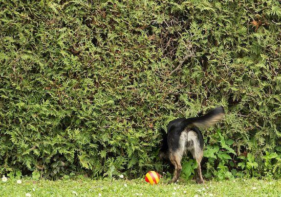 20131104090026dog-tail.jpg
