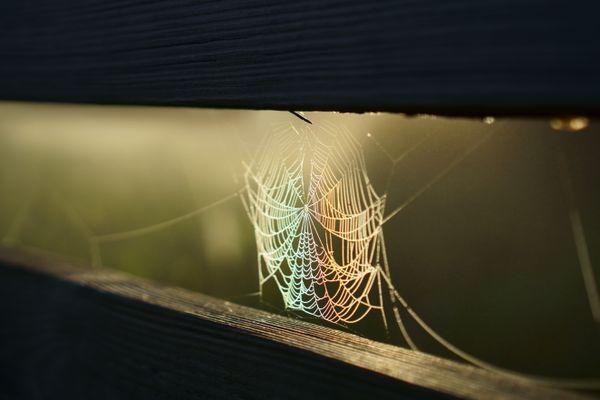 Refraction of morning light over spider web thumbnail