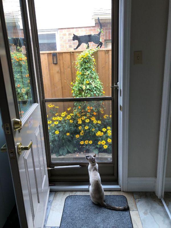 Contemplative cat thumbnail