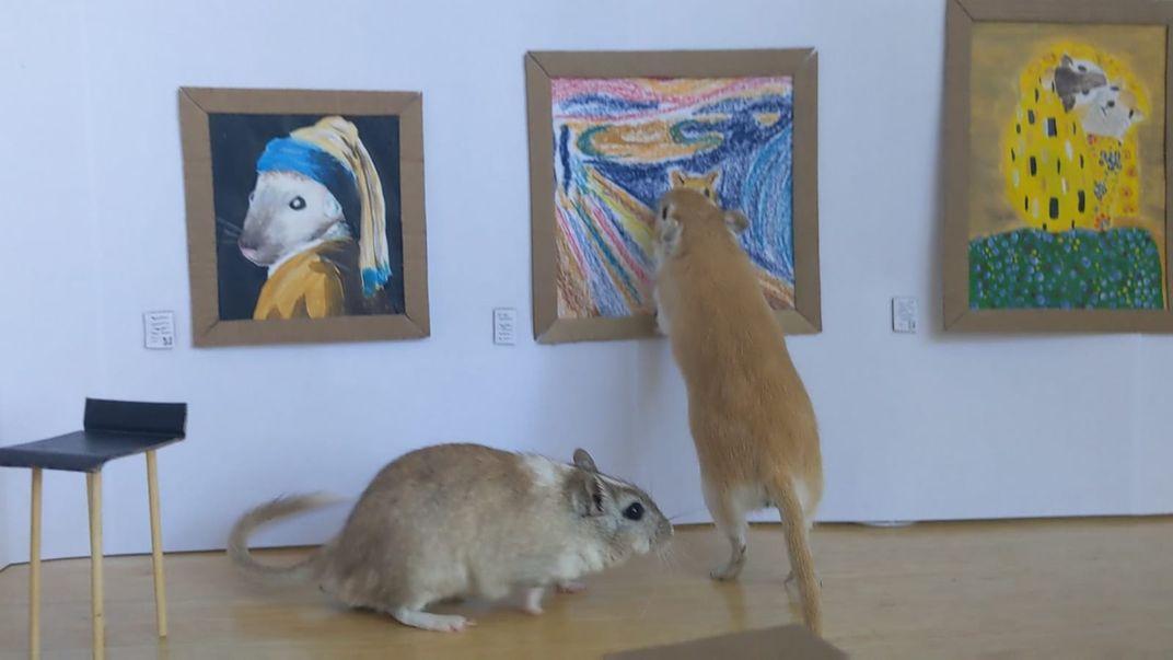 Quarantined Couple Builds Art Museum to Entertain Pet Gerbils