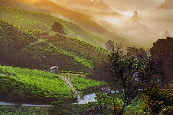 Sunrise in Cameron Highland thumbnail