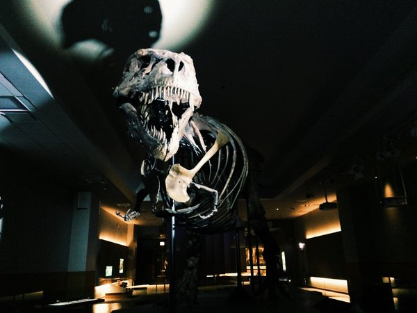 SUE the T.rex in her new home within Chicago's Field Museum. thumbnail