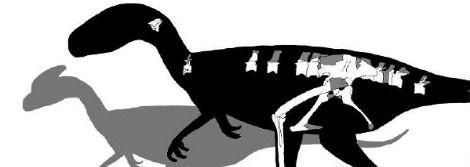 skeleton of Juratyrant