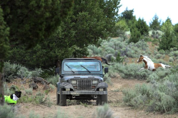 Wild horses on a Native American reservation. thumbnail