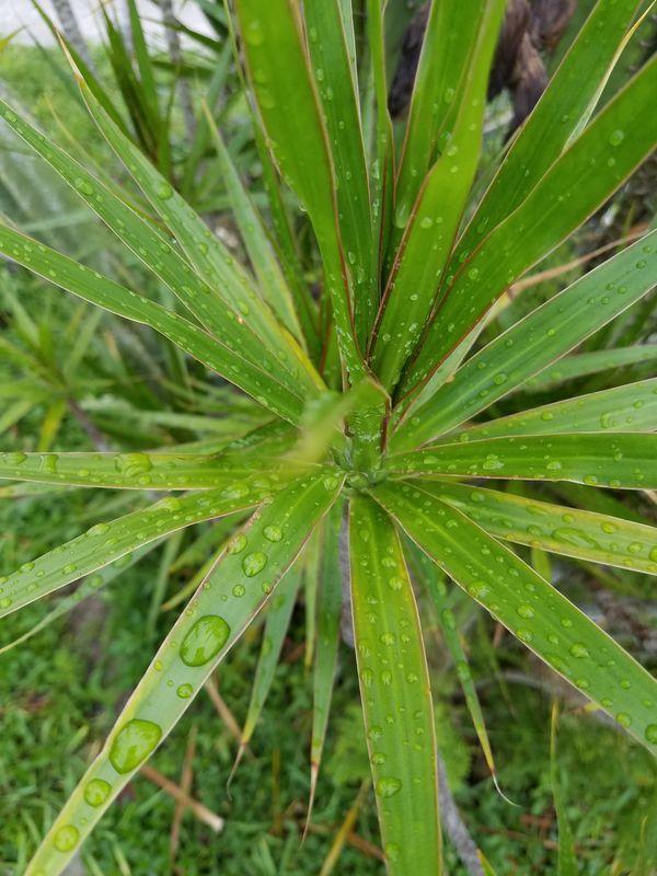 palm in the rain thumbnail