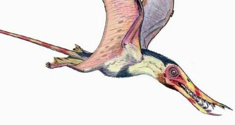 A restoration of the pterosaur Rhamphorhynchus by ДиБгд