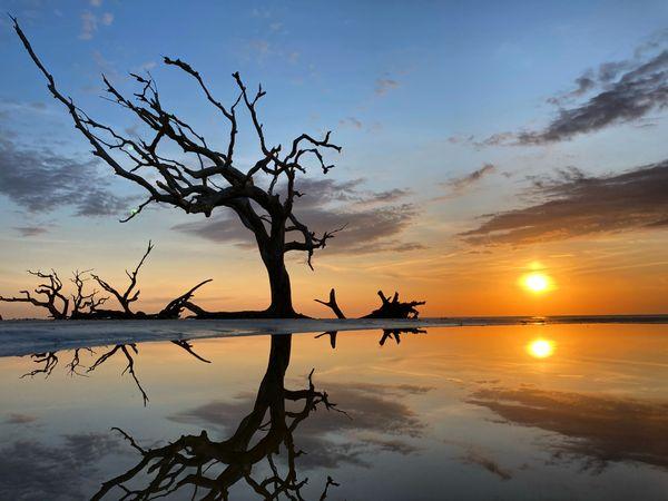 sunrise on driftwood beach thumbnail
