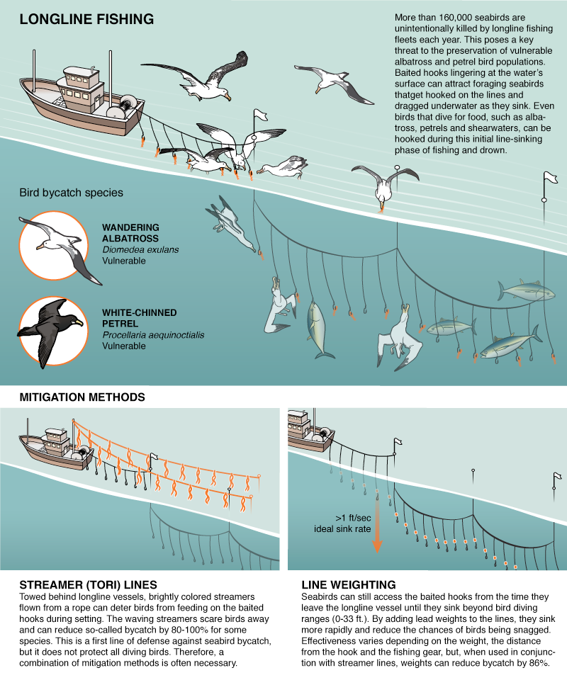 These Simple Fixes Could Save Thousands of Birds a Year From Fishing Boats