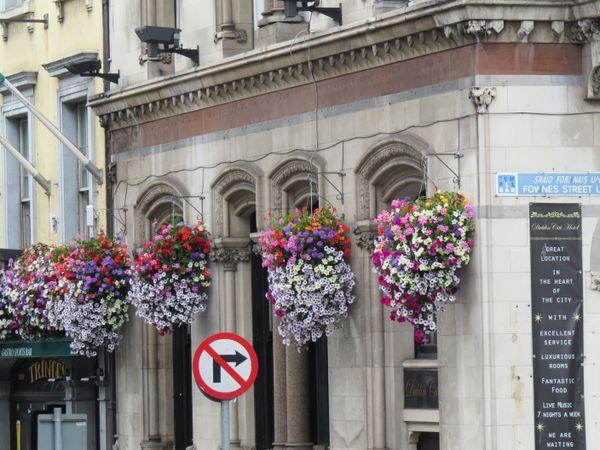 Colorfull flowers in Dublin thumbnail