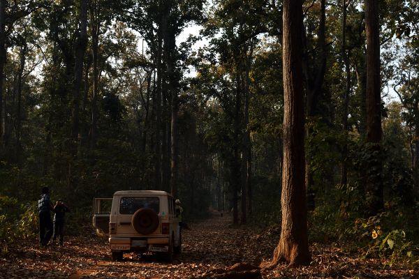 Safari Inside Saranda Forest thumbnail