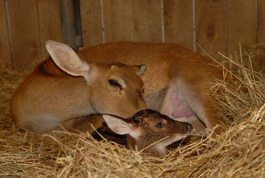 newborn_deer.jpg