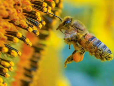 The phenomenon of increasing yearly pollen loads is accelerating.