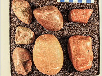 These polished stones collected in Wyoming may have been carried some 600 miles from Wisconsin inside the stomachs of sauropods.