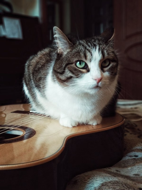 My lovely cat thumbnail