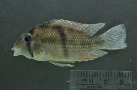 20110520110724Guyana-expedition-fish.jpg