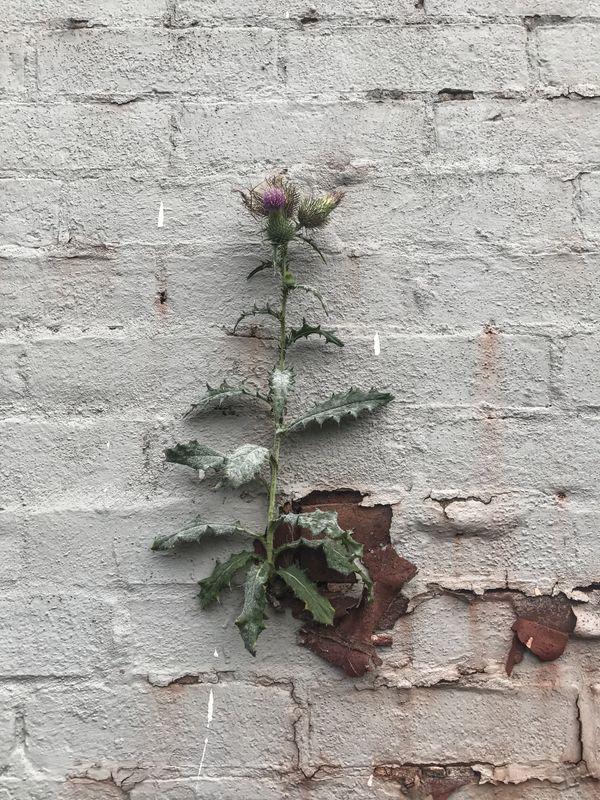 Wallflower thumbnail