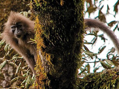 The discovery of new species is driven by new technologies, targeted surveys of little-studied ecosystems and a determined effort to identify plants and animals before their habitat is lost. The kipunji is one of 300 mammal species discovered in the past decade; it is thought to be Africa's rarest monkey.
