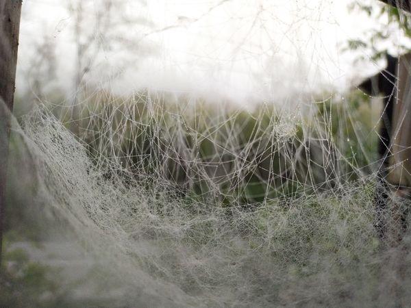 Web in September.  thumbnail