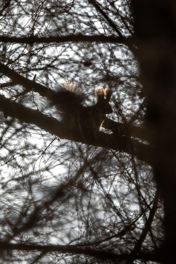 Shadow of squirrel thumbnail