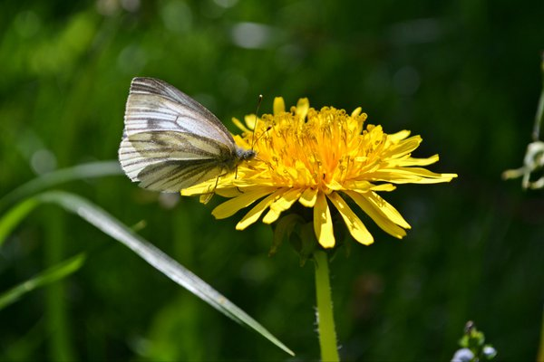 The butterfly on the flower thumbnail