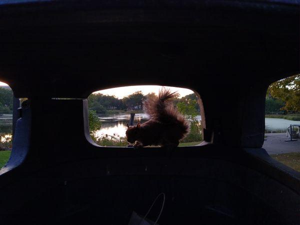 Squirrel!!! thumbnail