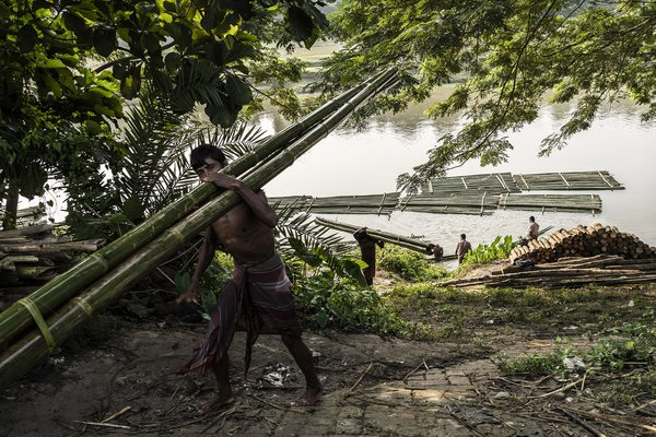 Traditional transportation of bamboo in Tripura, India. thumbnail