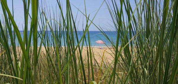 Lonely beach umbrella thumbnail