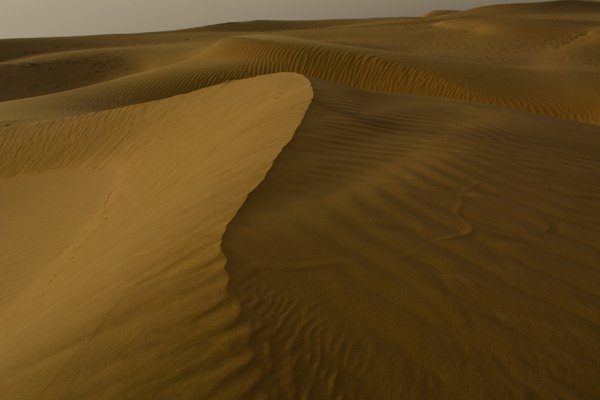 Sand Dune In The Thar Desert, Rajasthan, India thumbnail