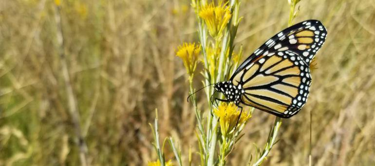 The Best Place to Watch Monarch Butterflies Migrate Might Be This Little California Beach Town