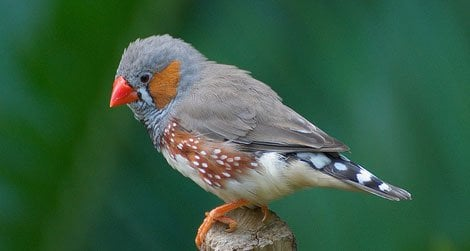 20120202100113finch-telomere-research-study.jpg