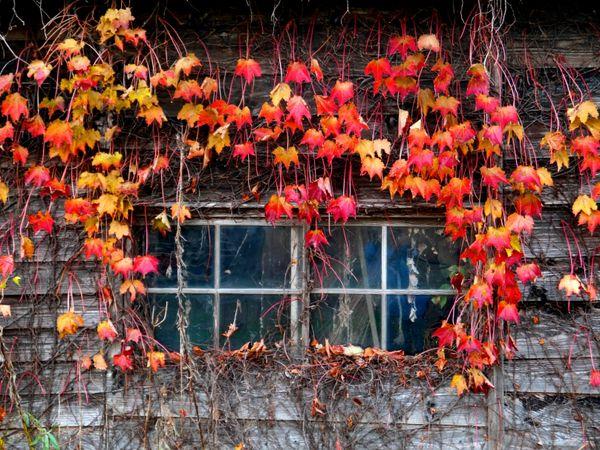 November Window on phantom Isle thumbnail