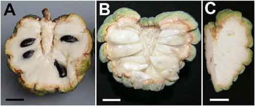 20110520090234fruit-seeds-pnas.jpg