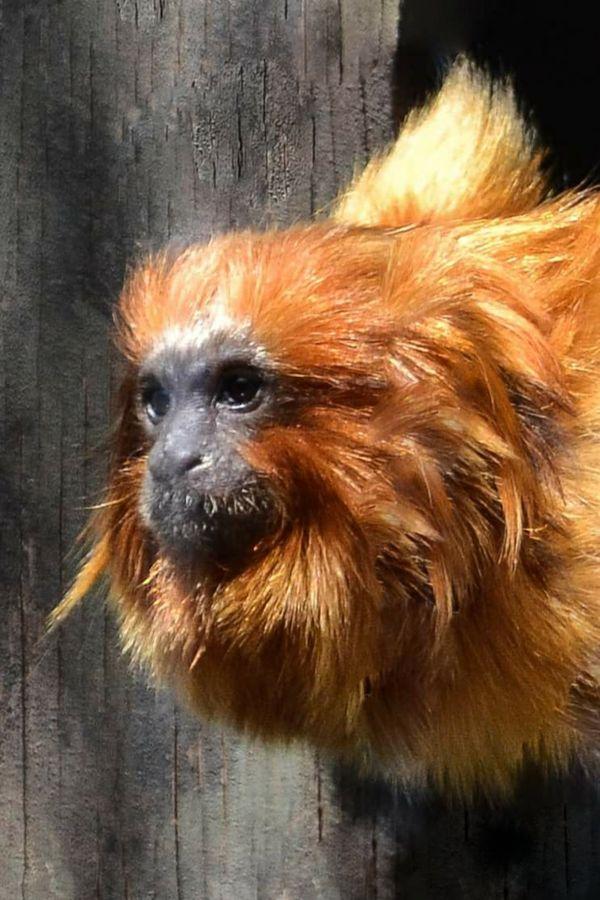 Monkey See thumbnail