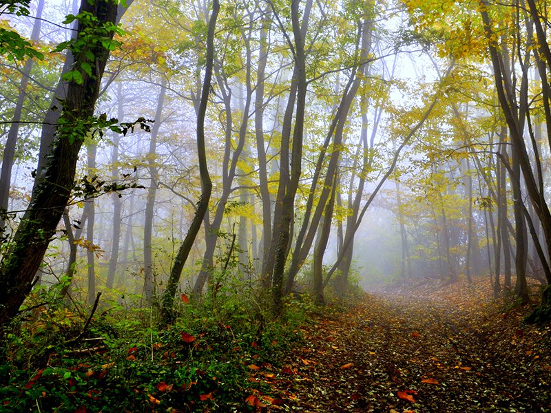 Forest in France